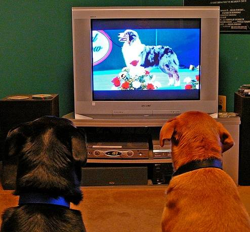 Cute Dogs Watching Tv