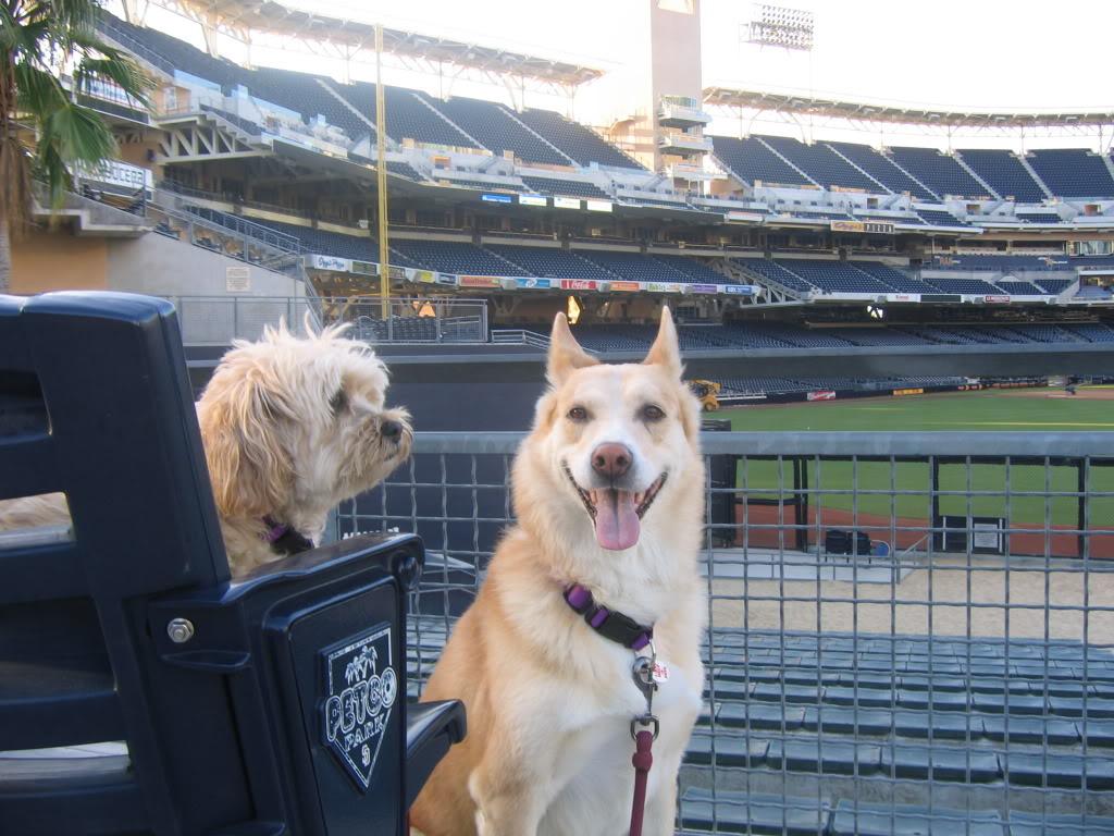 Dog Friendly Shopping San Diego