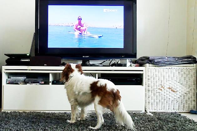 a dog tv
