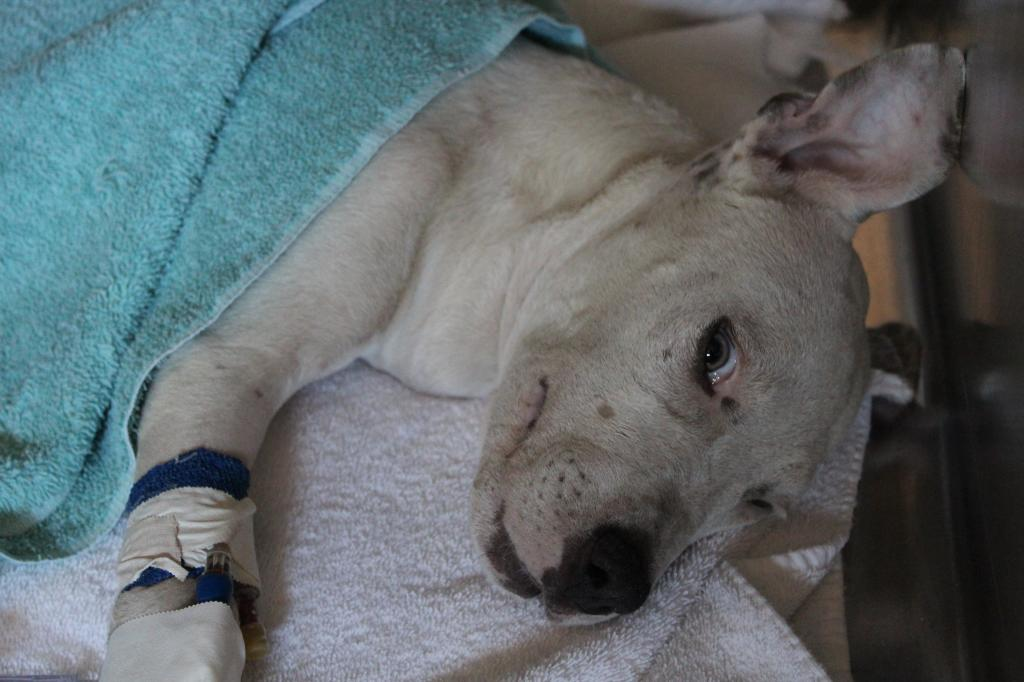 puppy u2019s leg ripped off in the fight for his life