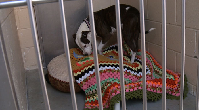 dog-blankets