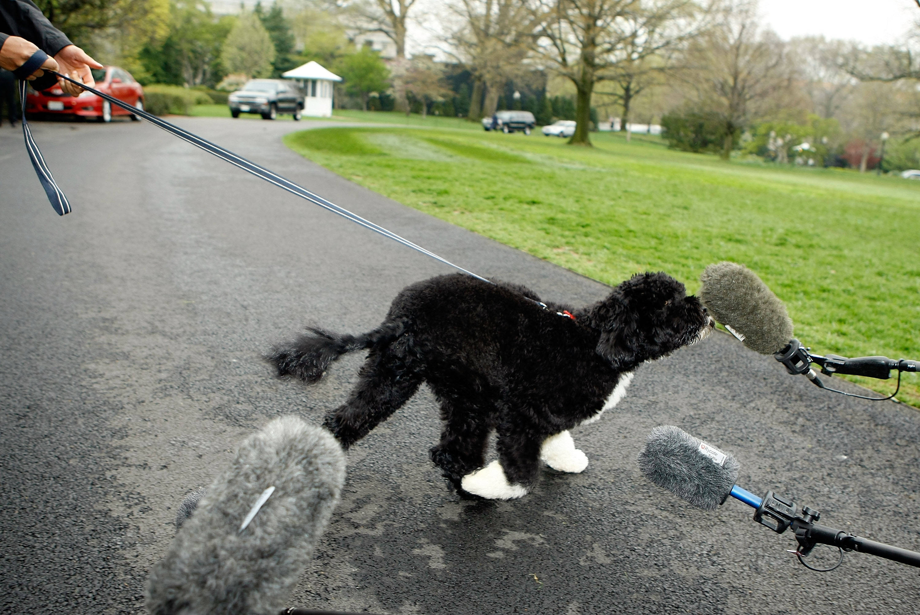 How Old Is Bo Obama S Dog