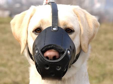 dog muzzel