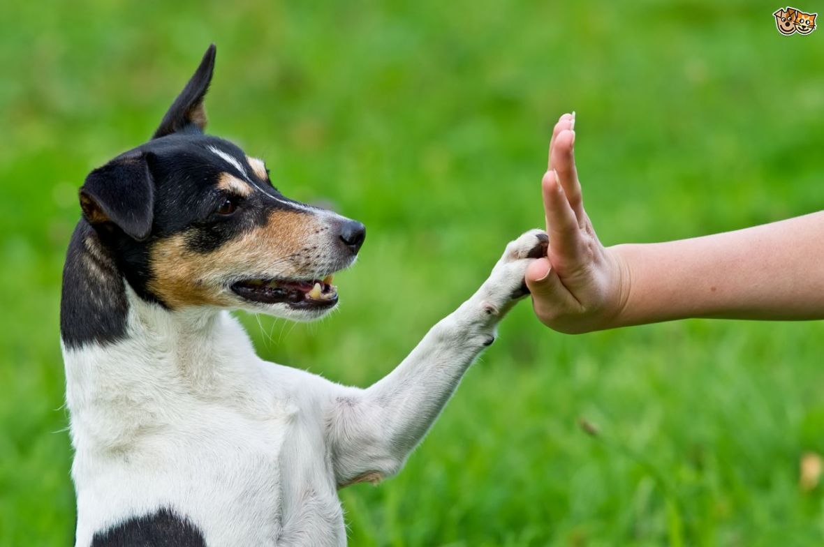 canine-communication-three-ways-in-which-you-might-be-doing-your-dog-a-disservice-5243e60807331
