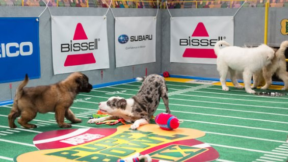 puppy_bowl_ix