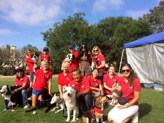 Inside the world of flyball with San Diego's very own the Ballistic Racers flyball team