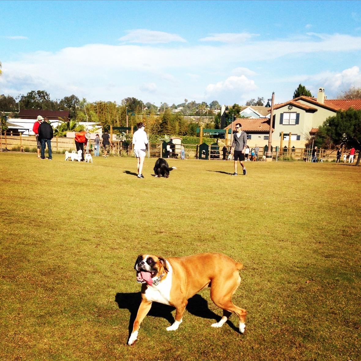 encinitas-dog-walkers-get-new-park
