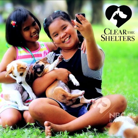 event-clear-the-shelters
