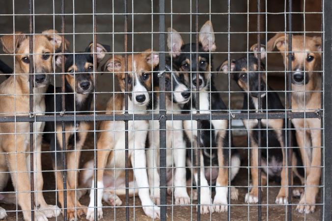 animal-shelter-month