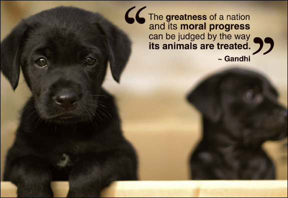 the-greatnes-of-a-nation-and-its-more-progress-can-be-judged-by-the-way-its-animals-are-treated-gandhi