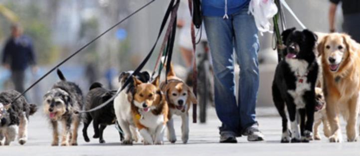dog-walking-business.jpg